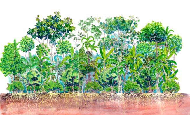 Conceitos de agrofloresta